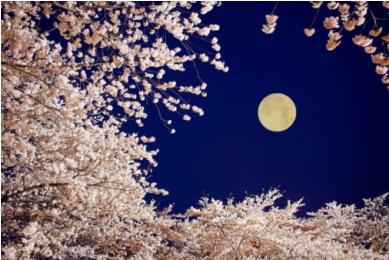 Лунный календарь красоты и здоровья на апрель 2011 года