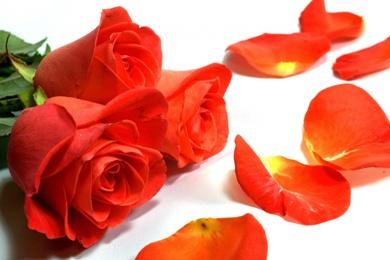 Розы для Деда Склероза