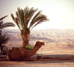 Уроки от верблюда