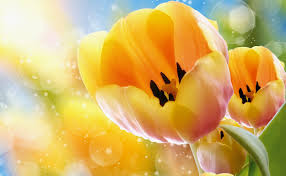 цветочные ритуалы