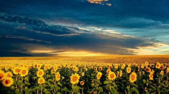 ритуалы в день летнего солнцестояния