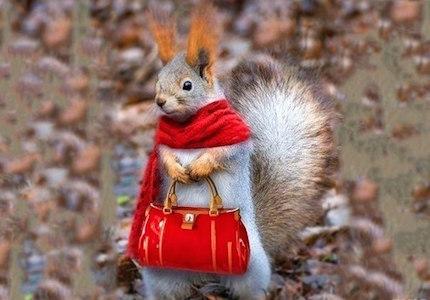 осень - повод носить шарфик
