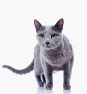 Кошка, которая сама по себе