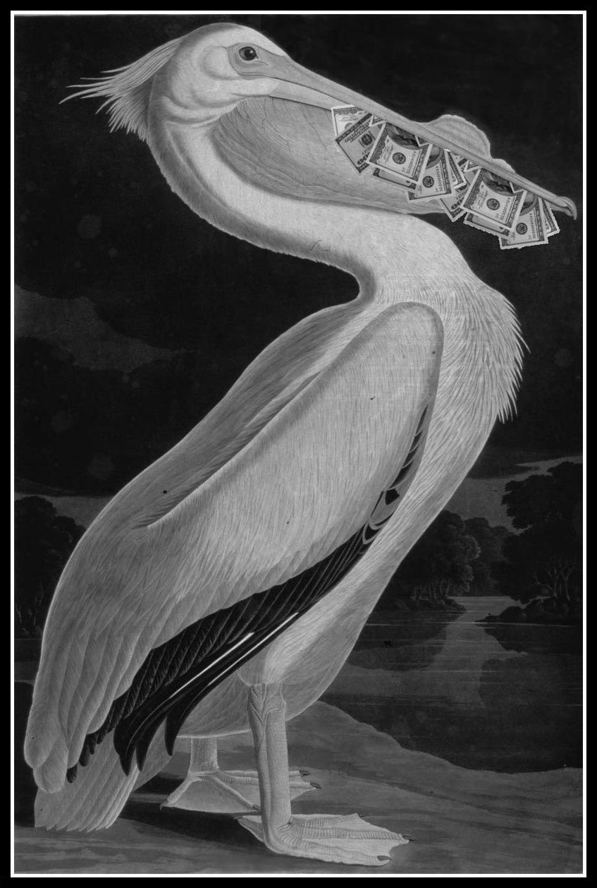 Magic-Pelican.jpg